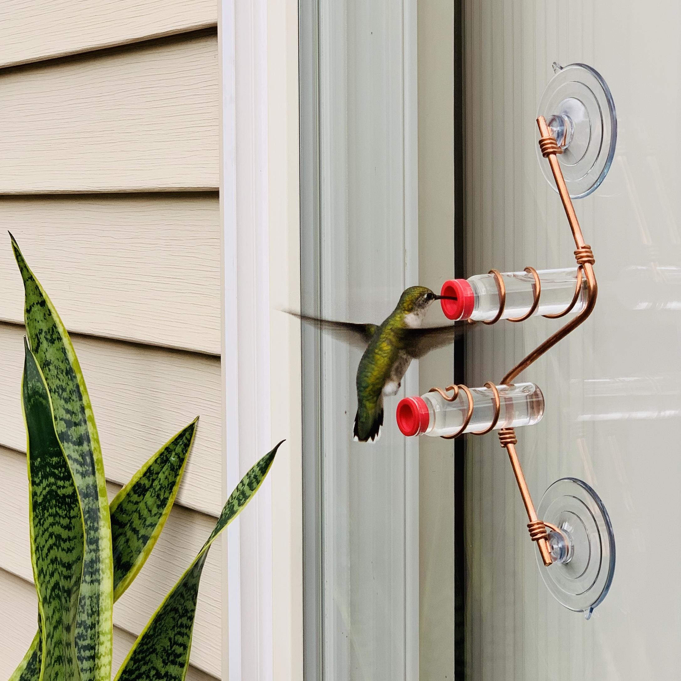 A beautiful green hummingbird feeds from a Geometric Window Hummingbird Feeder